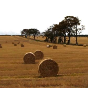Ian LEDWARD - Autumn Hedgerow with Bales