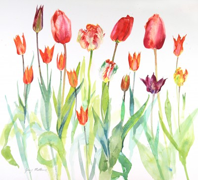 Ann's tulips with 'Ballerina' painting by artist Jenny MATTHEWS