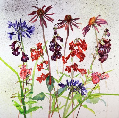 Scottish Artist Jenny MATTHEWS - Penstemon