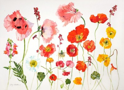 Scottish Artist Jenny MATTHEWS - Orange Poppies