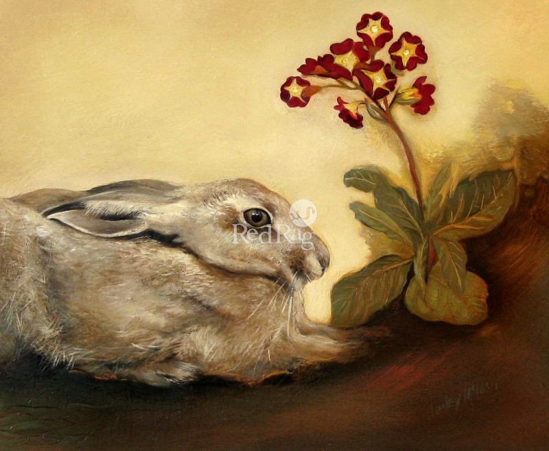 Lesley McLAREN - Hare and Primula